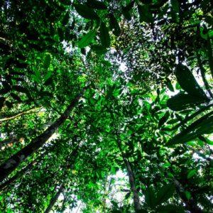 Per un'ecologia integrale. In preghiera con il Sinodo Amazzonico